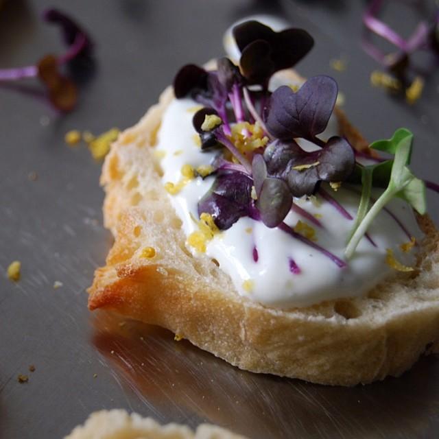 Lemon Goat Cheese Tartine With Sango Radish Sprouts & Light Yogurt