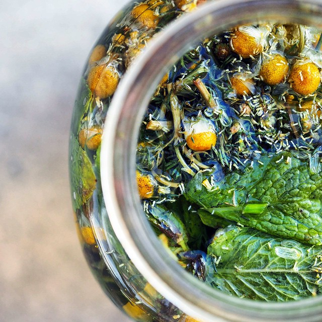 Chamomile Infused Sun Tea