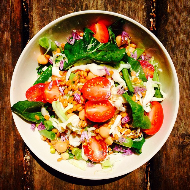 Sprouted Grain And Legume Salad